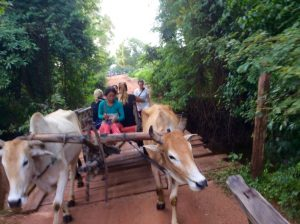 Ox cart in Cambodian countryside